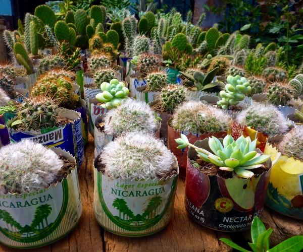 cactus-639501